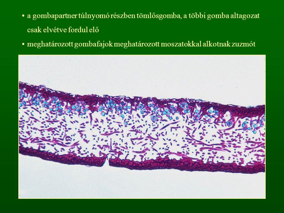 a gombapartner túlnyomó részben tömlősgomba, a többi gomba altagozat csak elvétve fordul elő meghatározott gombafajok meghatározott moszatokkal alkotn