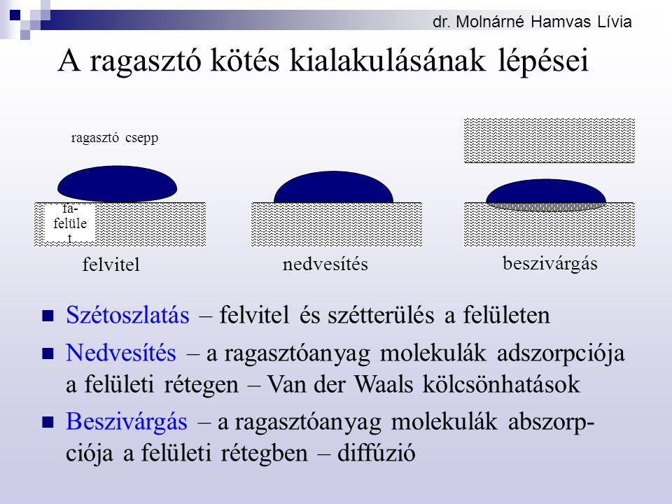 dr. Molnárné Hamvas Lívia felvitel nedvesítés beszivárgás A ragasztó kötés kialakulásának lépései ragasztó csepp fa- felüle t Szétoszlatás – felvitel