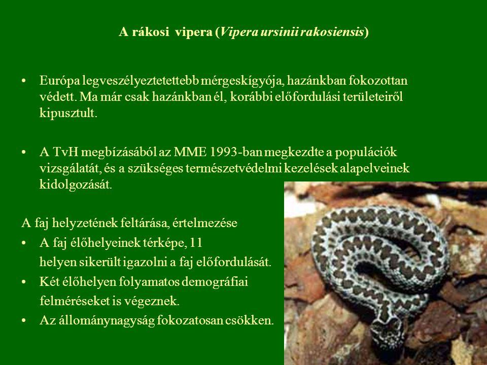 A rákosi vipera (Vipera ursinii rakosiensis) Európa legveszélyeztetettebb mérgeskígyója, hazánkban fokozottan védett. Ma már csak hazánkban él, korább