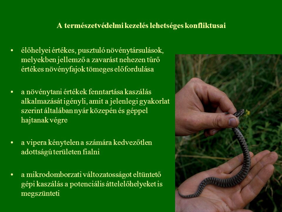 A természetvédelmi kezelés lehetséges konfliktusai élőhelyei értékes, pusztuló növénytársulások, melyekben jellemző a zavarást nehezen tűrő értékes nö