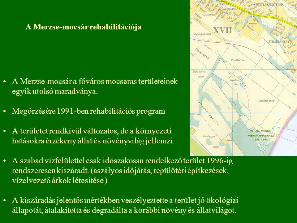 A Merzse-mocsár rehabilitációja A Merzse-mocsár a főváros mocsaras területeinek egyik utolsó maradványa. Megőrzésére 1991-ben rehabilitációs program A