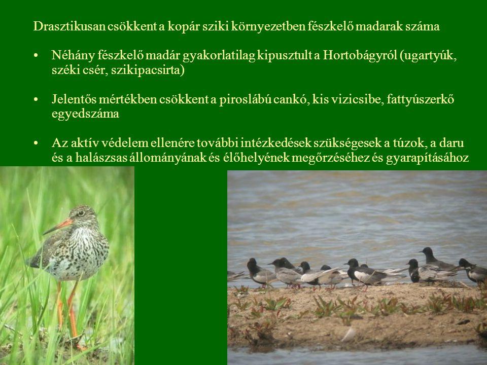 Drasztikusan csökkent a kopár sziki környezetben fészkelő madarak száma Néhány fészkelő madár gyakorlatilag kipusztult a Hortobágyról (ugartyúk, széki