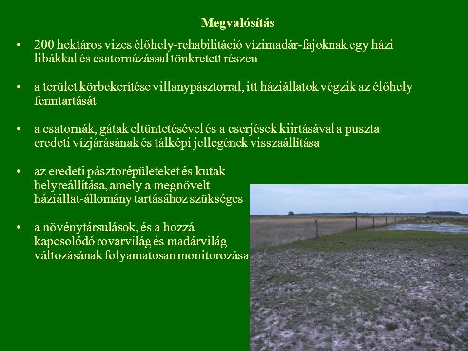 Megvalósítás 200 hektáros vizes élőhely-rehabilitáció vízimadár-fajoknak egy házi libákkal és csatornázással tönkretett részen a terület körbekerítése