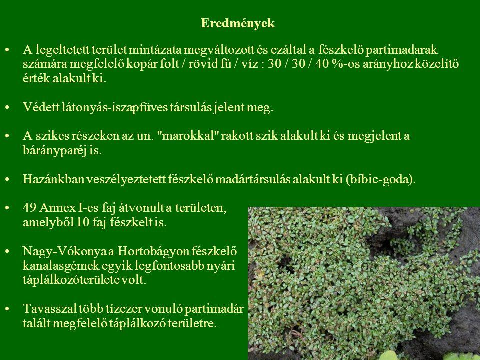Eredmények A legeltetett terület mintázata megváltozott és ezáltal a fészkelő partimadarak számára megfelelő kopár folt / rövid fű / víz : 30 / 30 / 4
