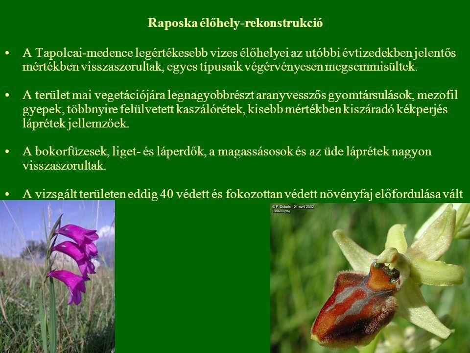 Raposka élőhely-rekonstrukció A Tapolcai-medence legértékesebb vizes élőhelyei az utóbbi évtizedekben jelentős mértékben visszaszorultak, egyes típusa