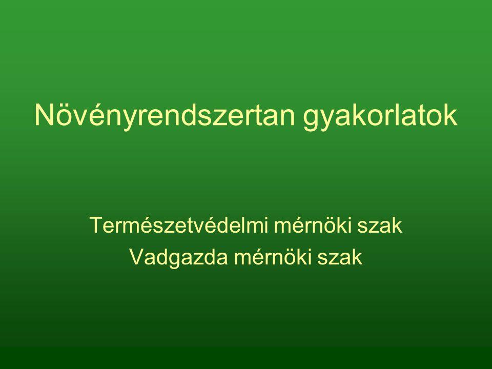 Gyertyán bábaseprő – Taphrina carpini: nincs termőtest Tölgy lisztharmat – Microsphaera quercina: kleisztotécium Erdeifenyő tűkarcgomba – Lophodermium pinastri: apotécium Narancssárga csészegomba – Peziza aurantia: apotécium Ízletes kucsmagomba – Morchella esculenta: összetett nyeles apotécium (süveg + tönk) Redős papsapkagomba – Helvella esculenta: összetett nyeles apotécium (süveg + tönk) A tanult tömlősgombák termőtesttípusai: