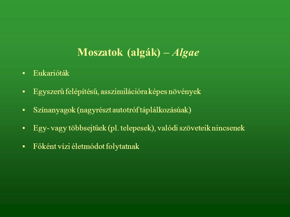 Moszatok (algák) – Algae Eukarióták Egyszerű felépítésű, asszimilációra képes növények Színanyagok (nagyrészt autotróf táplálkozásúak) Egy- vagy többs