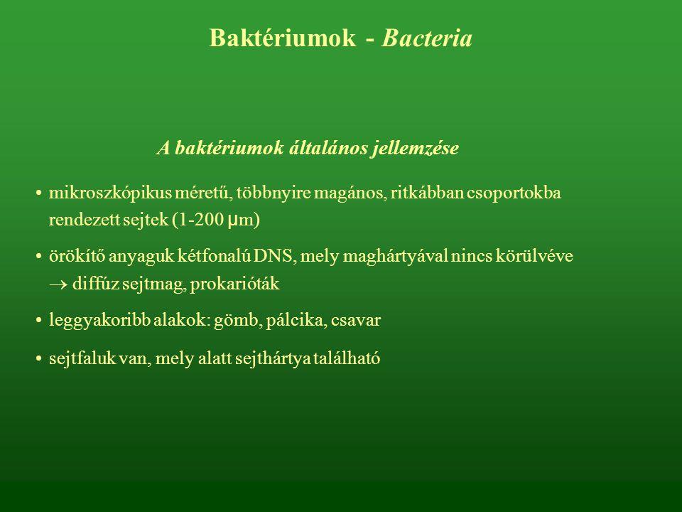 A baktériumok általános jellemzése mikroszkópikus méretű, többnyire magános, ritkábban csoportokba rendezett sejtek (1-200 μ m) örökítő anyaguk kétfon