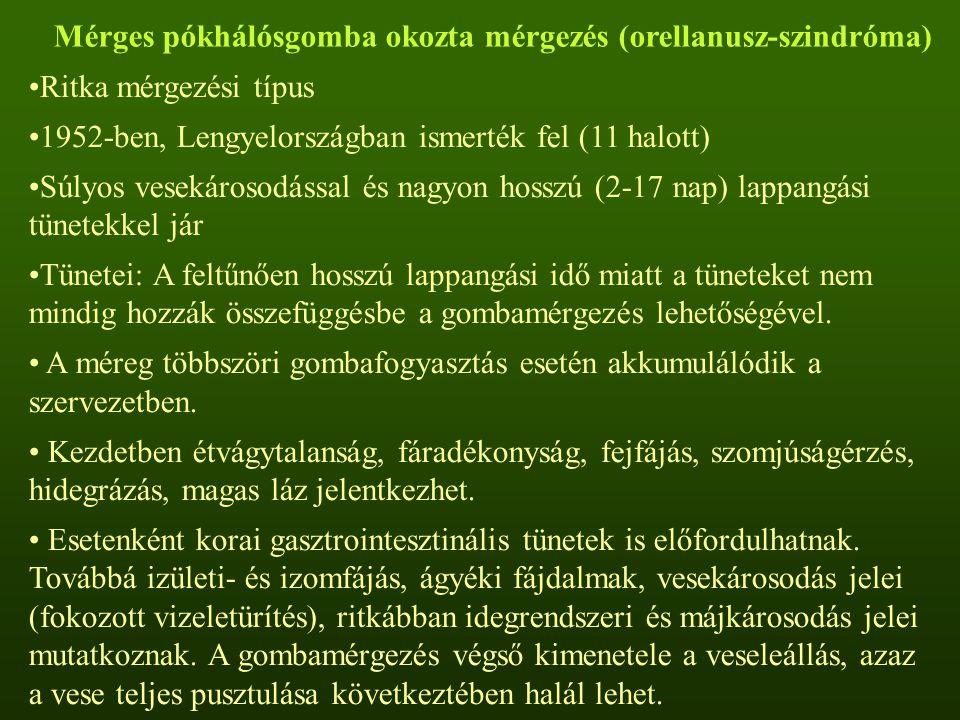 Mérges pókhálósgomba okozta mérgezés (orellanusz-szindróma) Ritka mérgezési típus 1952-ben, Lengyelországban ismerték fel (11 halott) Súlyos vesekáros