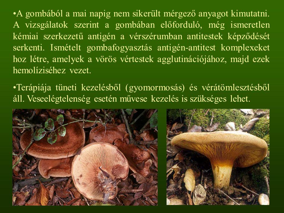A gombából a mai napig nem sikerült mérgező anyagot kimutatni. A vizsgálatok szerint a gombában előforduló, még ismeretlen kémiai szerkezetű antigén a