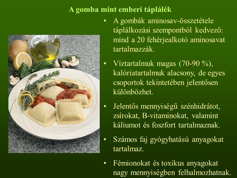 A gomba mint emberi táplálék A gombák aminosav-összetétele táplálkozási szempontból kedvező: mind a 20 fehérjealkotó aminosavat tartalmazzák. Víztarta
