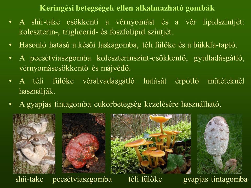 Immunstimuláns és rák ellen ható gombák Az óriás pöfeteg vírusgátló és antitumor hatású.