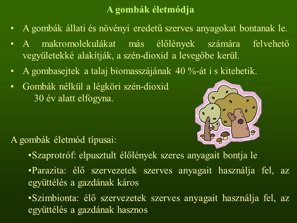 A gombák életmódja A gombák állati és növényi eredetű szerves anyagokat bontanak le. A makromolekulákat más élőlények számára felvehető vegyületekké a