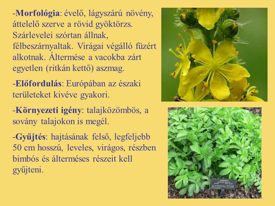 -Morfológia: évelő, lágyszárú növény, áttelelő szerve a rövid gyöktörzs. Szárlevelei szórtan állnak, félbeszárnyaltak. Virágai végálló füzért alkotnak