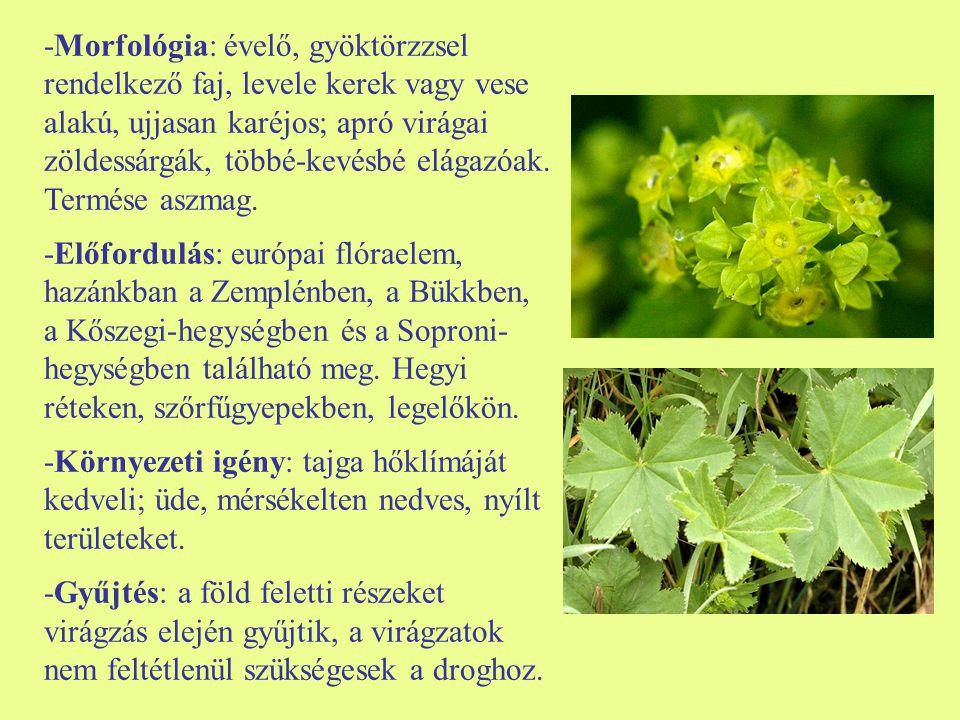 -Morfológia: évelő, gyöktörzzsel rendelkező faj, levele kerek vagy vese alakú, ujjasan karéjos; apró virágai zöldessárgák, többé-kevésbé elágazóak. Te