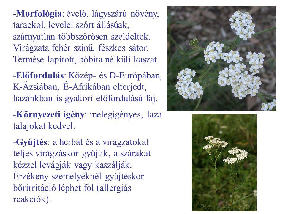 -Morfológia: évelő, lágyszárú növény, tarackol, levelei szórt állásúak, szárnyatlan többszörösen szeldeltek. Virágzata fehér színű, fészkes sátor. Ter