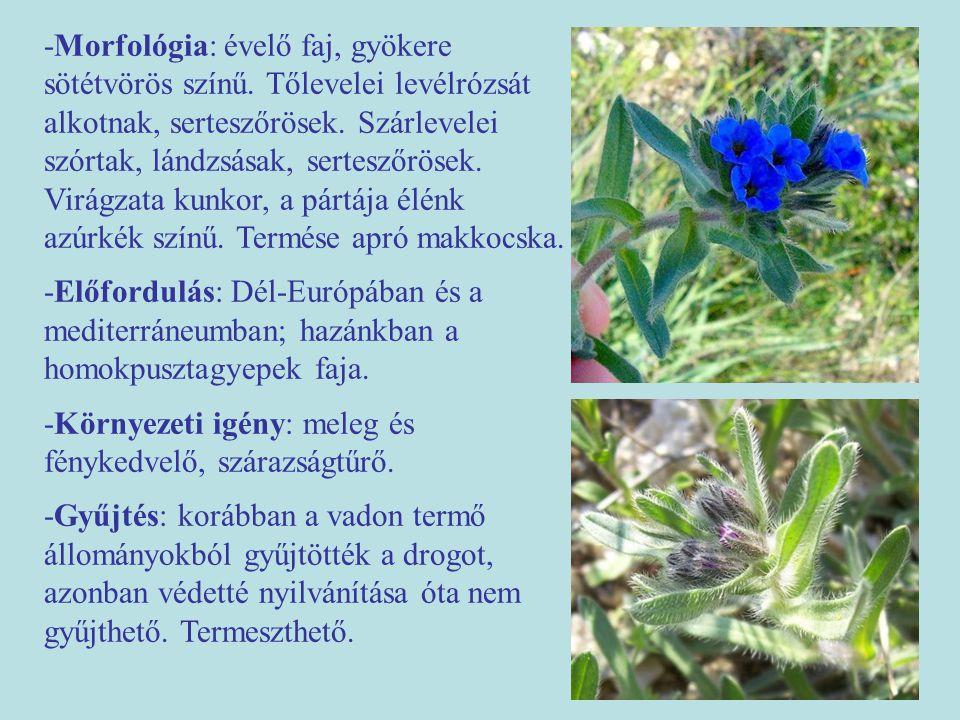 -Morfológia: évelő faj, gyökere sötétvörös színű. Tőlevelei levélrózsát alkotnak, serteszőrösek. Szárlevelei szórtak, lándzsásak, serteszőrösek. Virág