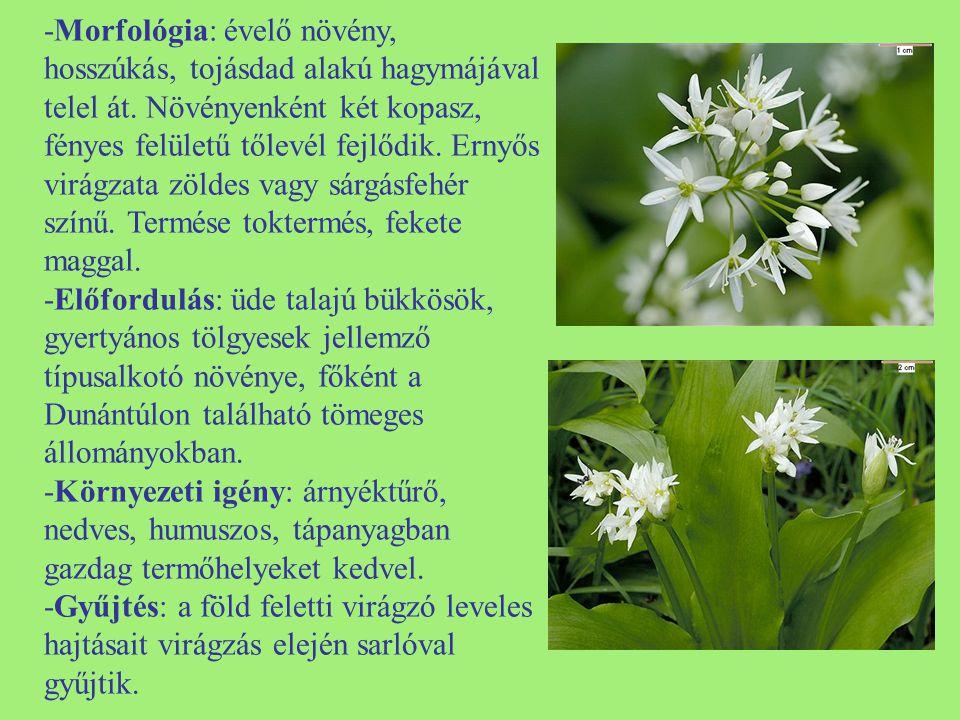 -Morfológia: évelő növény, hosszúkás, tojásdad alakú hagymájával telel át. Növényenként két kopasz, fényes felületű tőlevél fejlődik. Ernyős virágzata