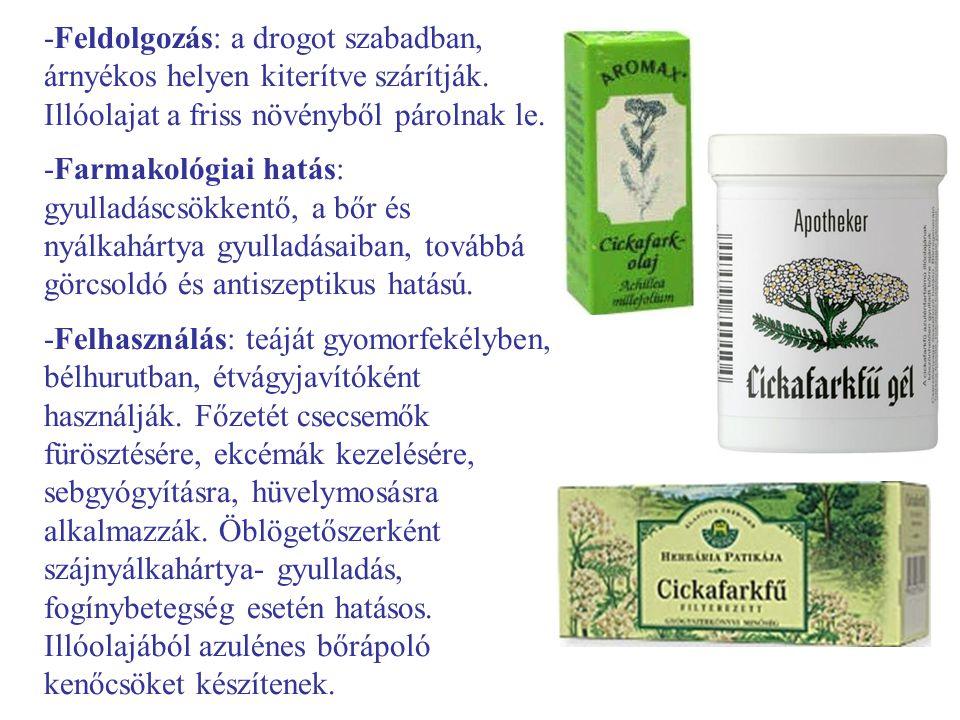 Nadragulya (Atropa bella-donna) -Egyéb nevei: maszlagos nadragulya -Család: Solanaceae -Drog: Belladonnae folium, Belladonnae radix, Belladonnae semen (magja- ritkán használják föl) -Hatóanyag: ornitin eredetű tropánvázas alkaloidok, atropin, hioszciamin, aszparagin, fitoszterin, chrisatropa-sav