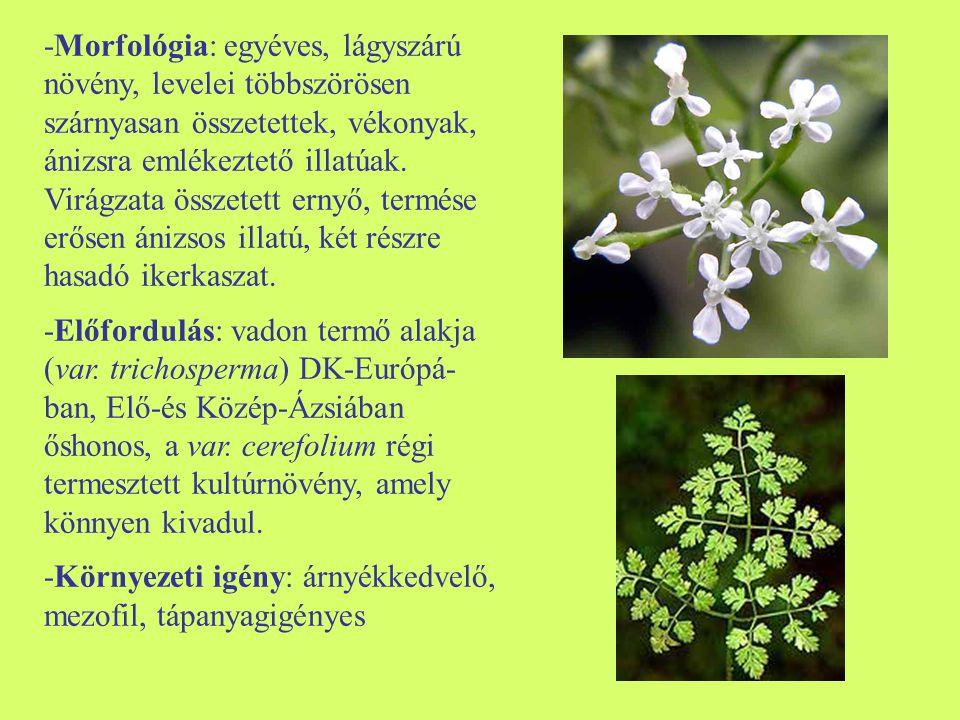 -Morfológia: egyéves, lágyszárú növény, levelei többszörösen szárnyasan összetettek, vékonyak, ánizsra emlékeztető illatúak. Virágzata összetett ernyő