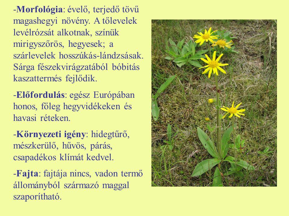 -Morfológia: évelő, terjedő tövű magashegyi növény. A tőlevelek levélrózsát alkotnak, színük mirigyszőrös, hegyesek; a szárlevelek hosszúkás-lándzsása