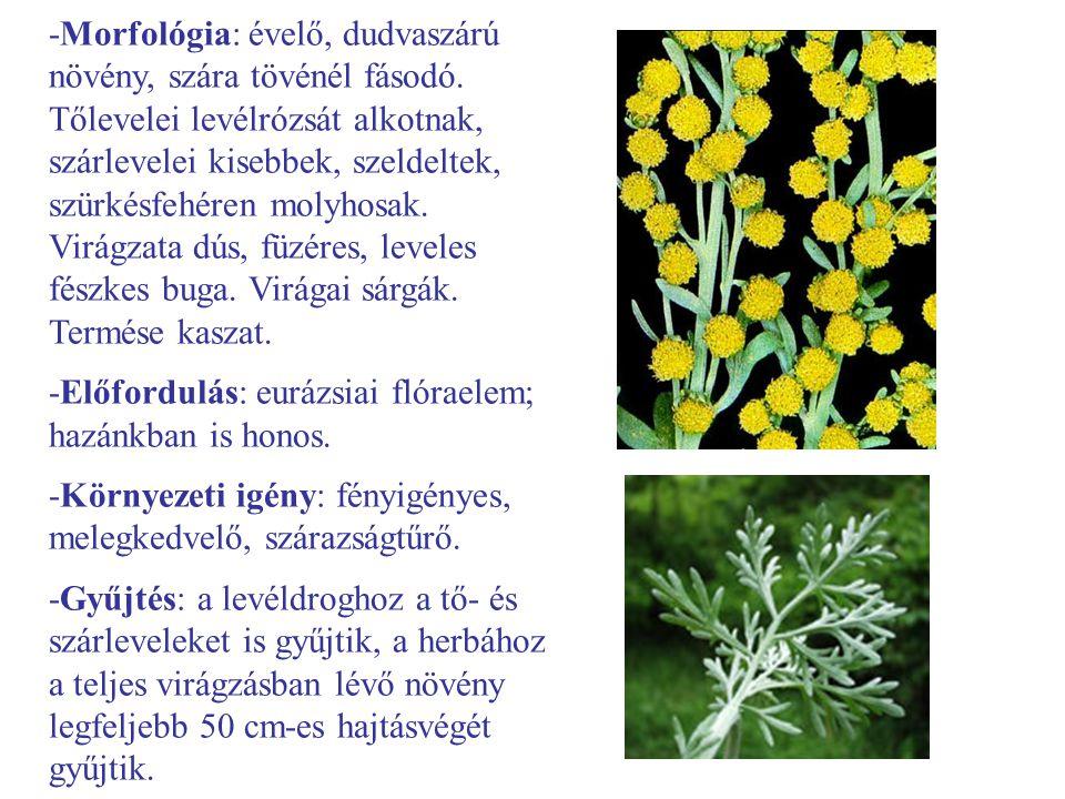 -Morfológia: évelő, dudvaszárú növény, szára tövénél fásodó. Tőlevelei levélrózsát alkotnak, szárlevelei kisebbek, szeldeltek, szürkésfehéren molyhosa