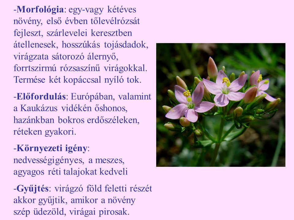 -Morfológia: egy-vagy kétéves növény, első évben tőlevélrózsát fejleszt, szárlevelei keresztben átellenesek, hosszúkás tojásdadok, virágzata sátorozó