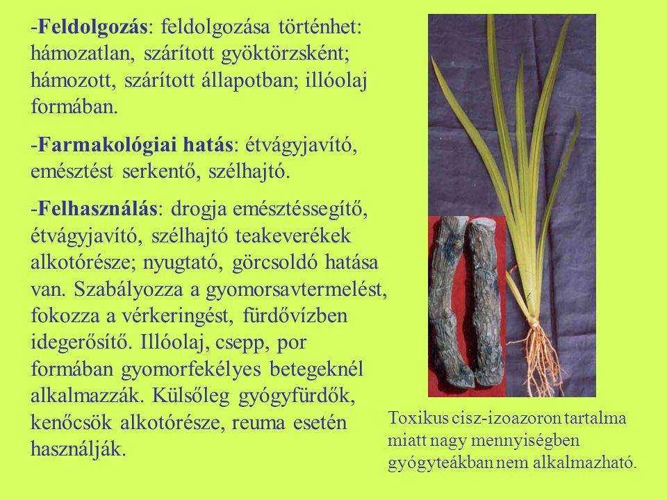 -Morfológia: évelő, gyöktörzzsel rendelkező faj, levele kerek vagy vese alakú, ujjasan karéjos; apró virágai zöldessárgák, többé-kevésbé elágazóak.