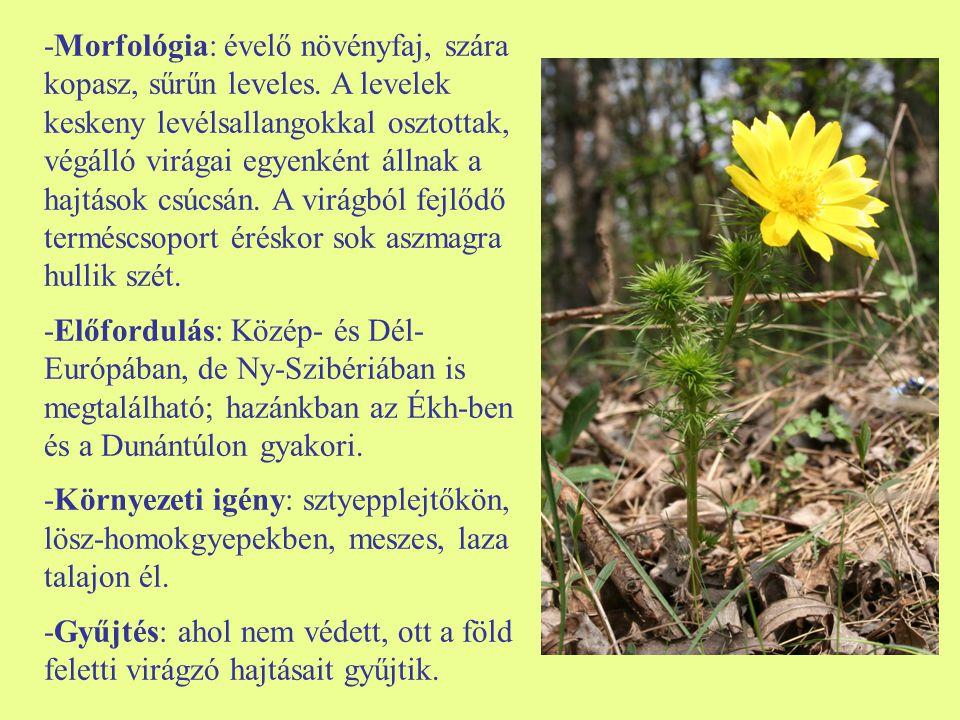 -Morfológia: évelő növényfaj, szára kopasz, sűrűn leveles. A levelek keskeny levélsallangokkal osztottak, végálló virágai egyenként állnak a hajtások