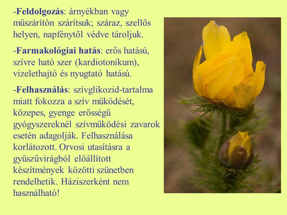 Közönséges párlófű (Agrimonia eupatoria) -Egyéb nevei: apróbojtorján, párlófű -Család: Rosaceae -Drog: Agrimoniae herba -Hatóanyag: cserzőanyag, kvercitrin flavonglikozid, keserűanyag, kovasav, citrom-, alma- és borkősav, nikotinsav- amid, antocianinok, illóolaj