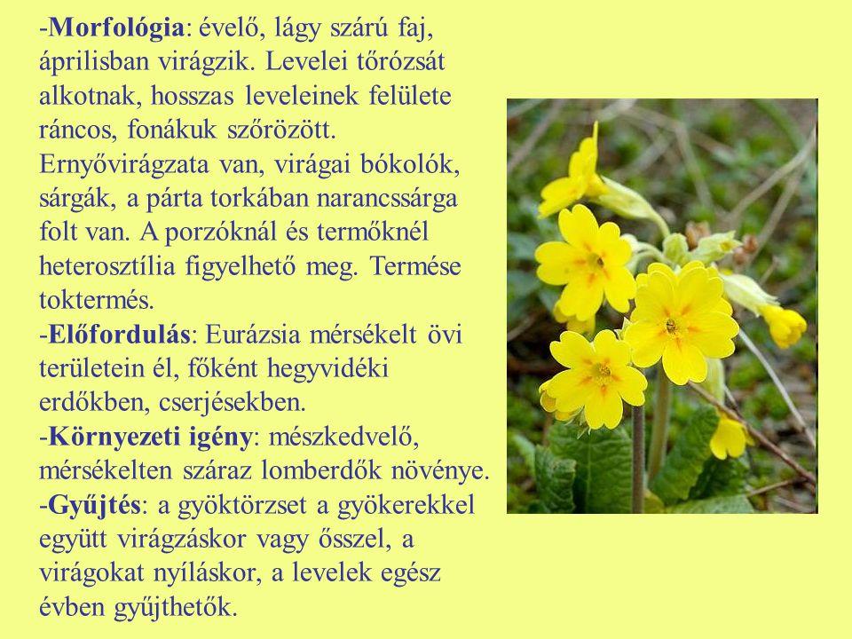 -Morfológia: évelő, lágy szárú faj, áprilisban virágzik. Levelei tőrózsát alkotnak, hosszas leveleinek felülete ráncos, fonákuk szőrözött. Ernyővirágz