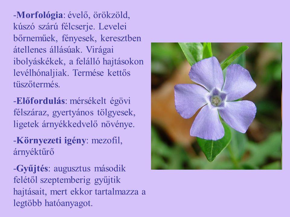 -Morfológia: évelő, örökzöld, kúszó szárú félcserje. Levelei bőrneműek, fényesek, keresztben átellenes állásúak. Virágai ibolyáskékek, a felálló hajtá