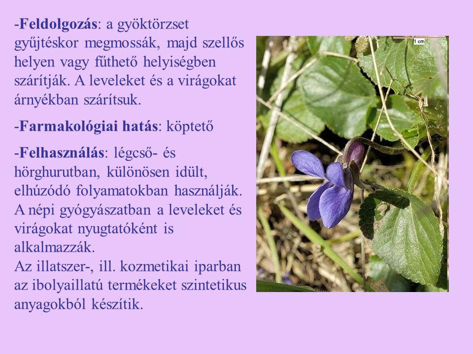 -Feldolgozás: a gyöktörzset gyűjtéskor megmossák, majd szellős helyen vagy fűthető helyiségben szárítják. A leveleket és a virágokat árnyékban száríts