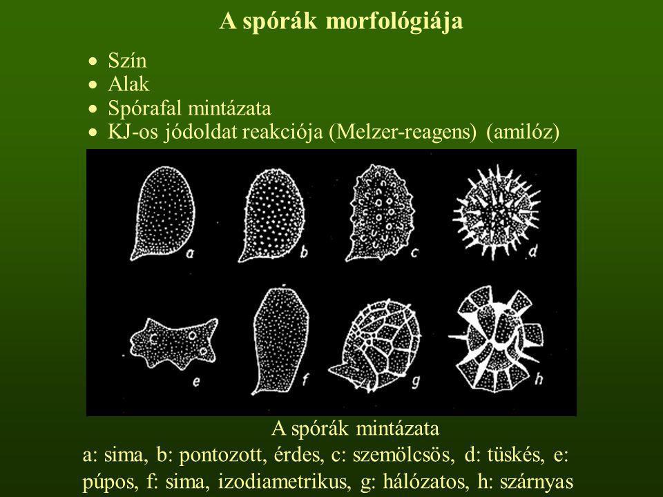 A spórák morfológiája  Szín  Alak  Spórafal mintázata  KJ-os jódoldat reakciója (Melzer-reagens) (amilóz) A spórák mintázata a: sima, b: pontozott
