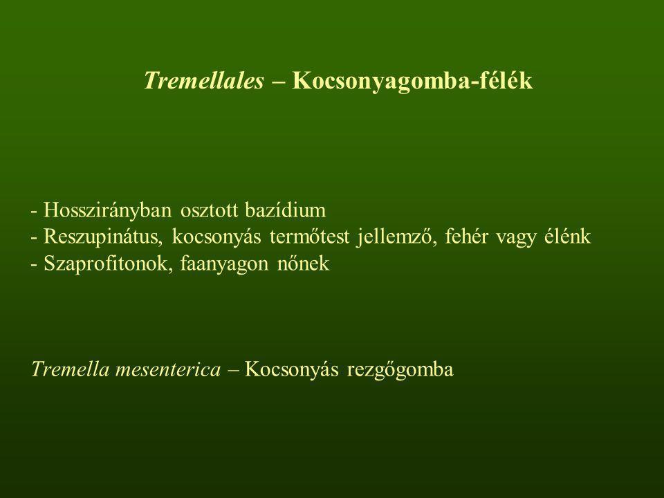 - Hosszirányban osztott bazídium - Reszupinátus, kocsonyás termőtest jellemző, fehér vagy élénk - Szaprofitonok, faanyagon nőnek Tremella mesenterica