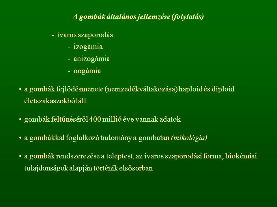 A gombák általános jellemzése (folytatás) -ivaros szaporodás -izogámia -anizogámia -oogámia a gombák fejlődésmenete (nemzedékváltakozása) haploid és d