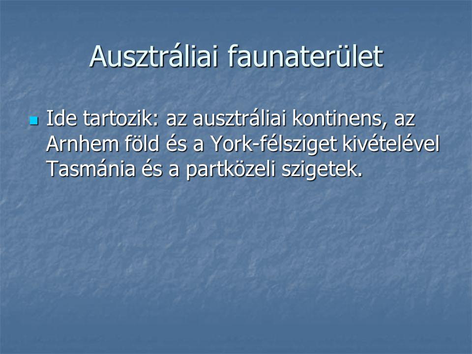 Ausztráliai faunaterület Ide tartozik: az ausztráliai kontinens, az Arnhem föld és a York-félsziget kivételével Tasmánia és a partközeli szigetek. Ide