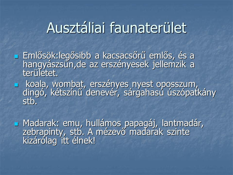 Ausztáliai faunaterület Emlősök:legősibb a kacsacsőrű emlős, és a hangyászsün,de az erszényesek jellemzik a területet. k koala, wombat, erszényes nyes