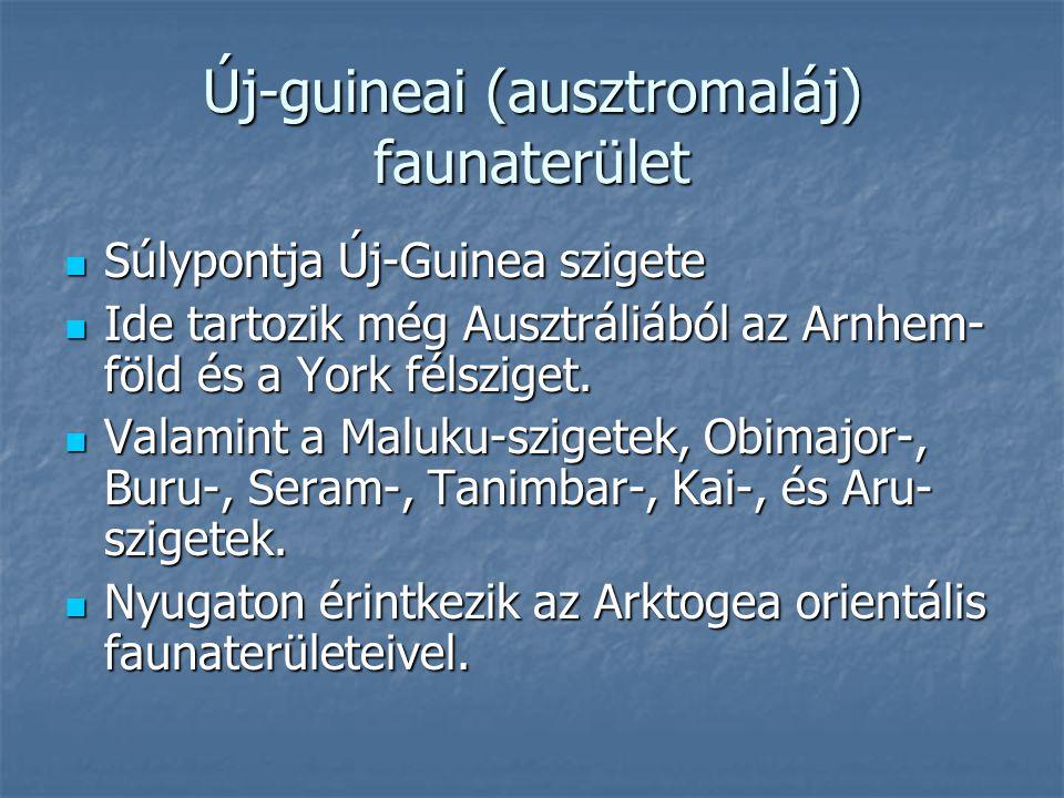 Új-guineai (ausztromaláj) faunaterület Súlypontja Új-Guinea szigete Súlypontja Új-Guinea szigete Ide tartozik még Ausztráliából az Arnhem- föld és a Y