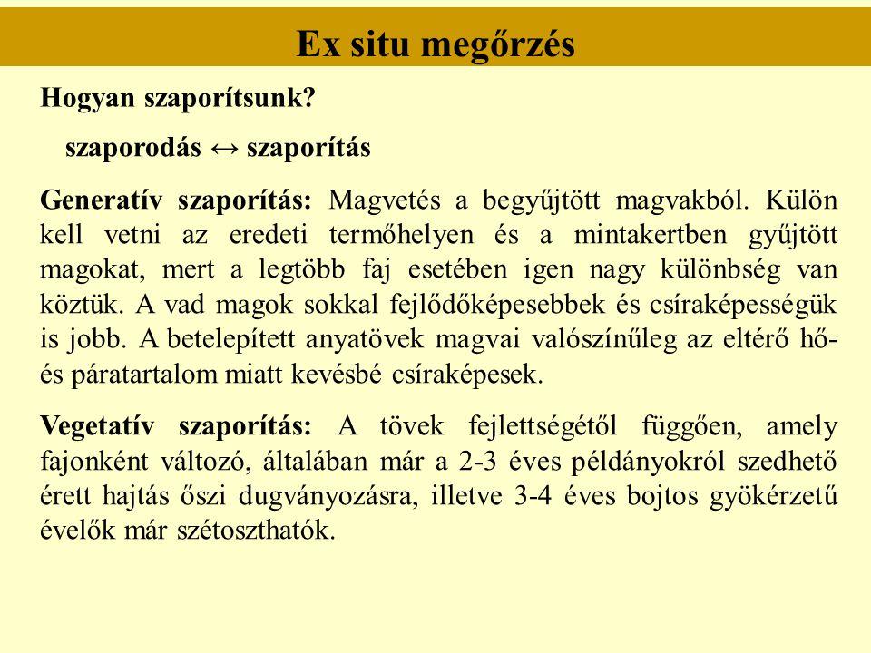 Ex situ megőrzés Hogyan szaporítsunk? szaporodás ↔ szaporítás Generatív szaporítás: Magvetés a begyűjtött magvakból. Külön kell vetni az eredeti termő