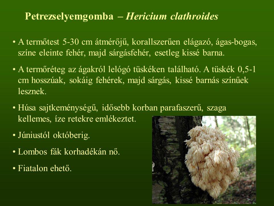 A termőtest 5-30 cm átmérőjű, korallszerűen elágazó, ágas-bogas, színe eleinte fehér, majd sárgásfehér, esetleg kissé barna.