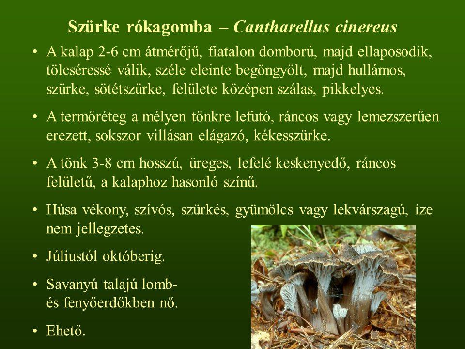 Szürke rókagomba – Cantharellus cinereus A kalap 2-6 cm átmérőjű, fiatalon domború, majd ellaposodik, tölcséressé válik, széle eleinte begöngyölt, majd hullámos, szürke, sötétszürke, felülete középen szálas, pikkelyes.