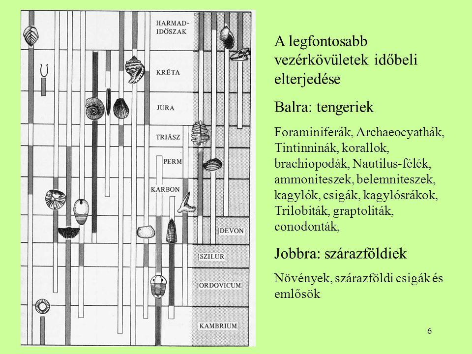 6 A legfontosabb vezérkövületek időbeli elterjedése Balra: tengeriek Foraminiferák, Archaeocyathák, Tintinninák, korallok, brachiopodák, Nautilus-félé