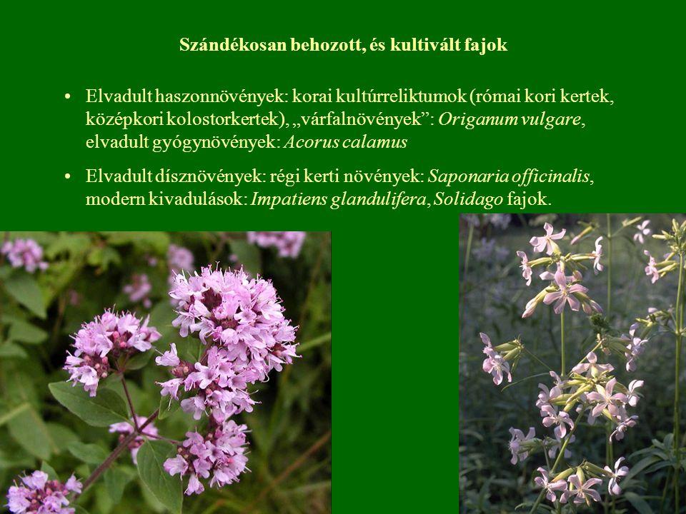 """Szándékosan behozott, és kultivált fajok Elvadult haszonnövények: korai kultúrreliktumok (római kori kertek, középkori kolostorkertek), """"várfalnövénye"""