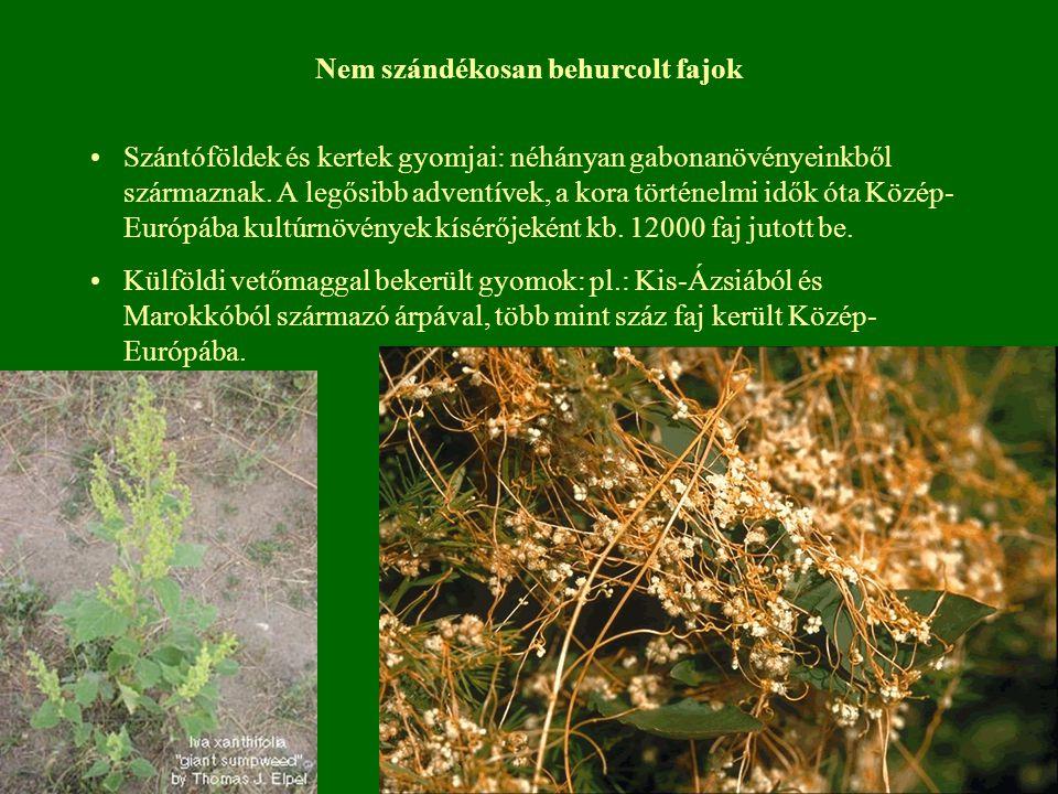 Nem szándékosan behurcolt fajok Szántóföldek és kertek gyomjai: néhányan gabonanövényeinkből származnak. A legősibb adventívek, a kora történelmi idők
