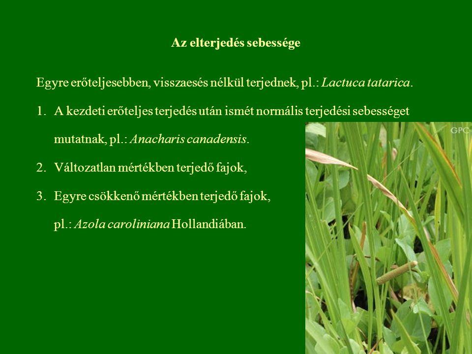 Az elterjedés sebessége Egyre erőteljesebben, visszaesés nélkül terjednek, pl.: Lactuca tatarica. 1.A kezdeti erőteljes terjedés után ismét normális t
