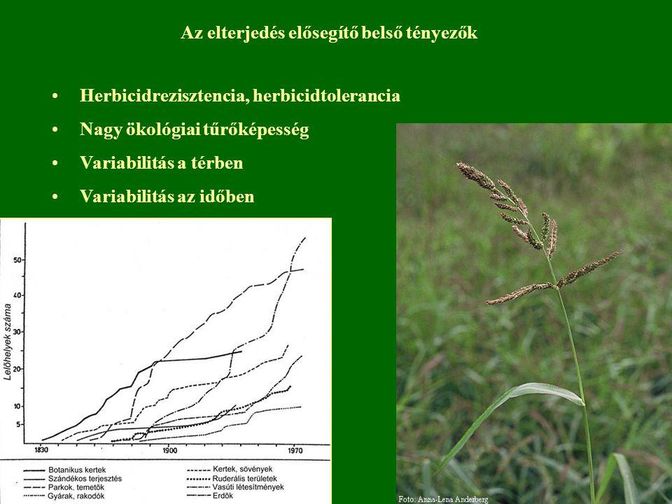 Herbicidrezisztencia, herbicidtolerancia Nagy ökológiai tűrőképesség Variabilitás a térben Variabilitás az időben Az elterjedés elősegítő belső tényez