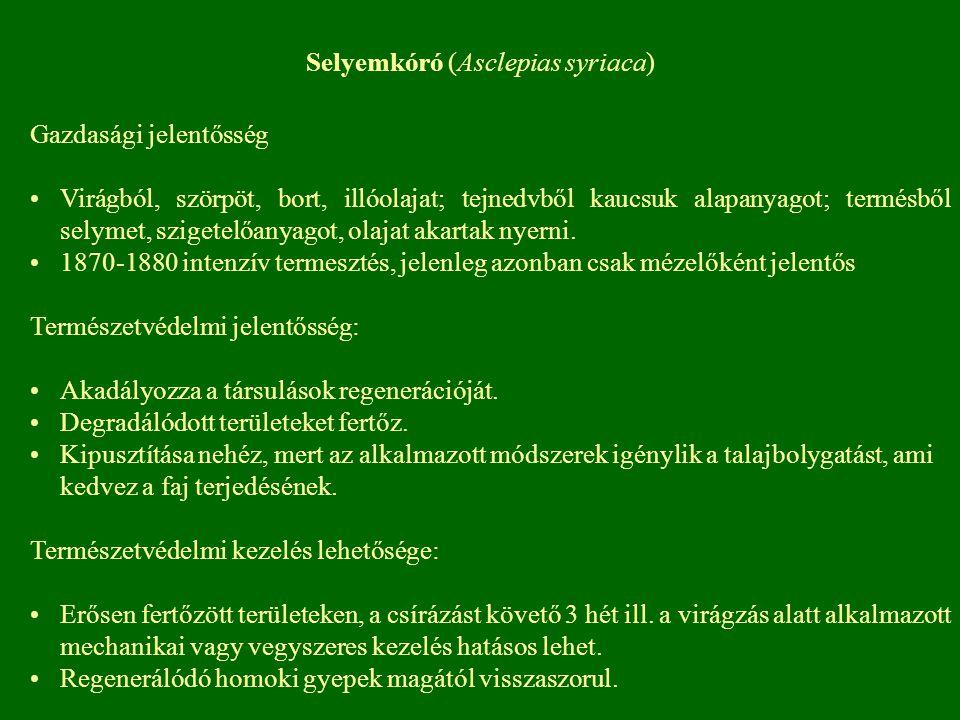 Selyemkóró (Asclepias syriaca) Gazdasági jelentősség Virágból, szörpöt, bort, illóolajat; tejnedvből kaucsuk alapanyagot; termésből selymet, szigetelő