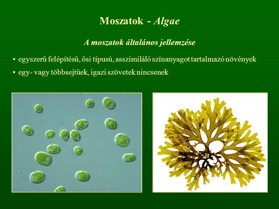 Moszatok - Algae A moszatok általános jellemzése egyszerű felépítésű, ősi típusú, asszimiláló színanyagot tartalmazó növények egy- vagy többsejtűek, i