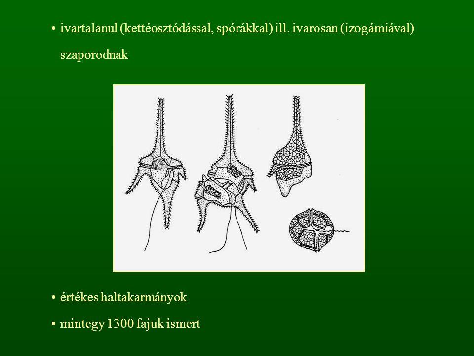 ivartalanul (kettéosztódással, spórákkal) ill. ivarosan (izogámiával) szaporodnak értékes haltakarmányok mintegy 1300 fajuk ismert